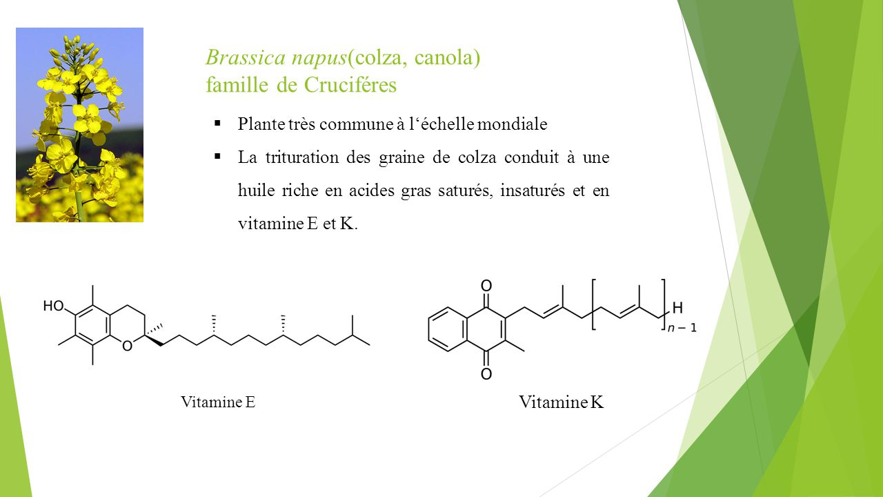 Brassica napus(colza, canola) famille de Cruciféres