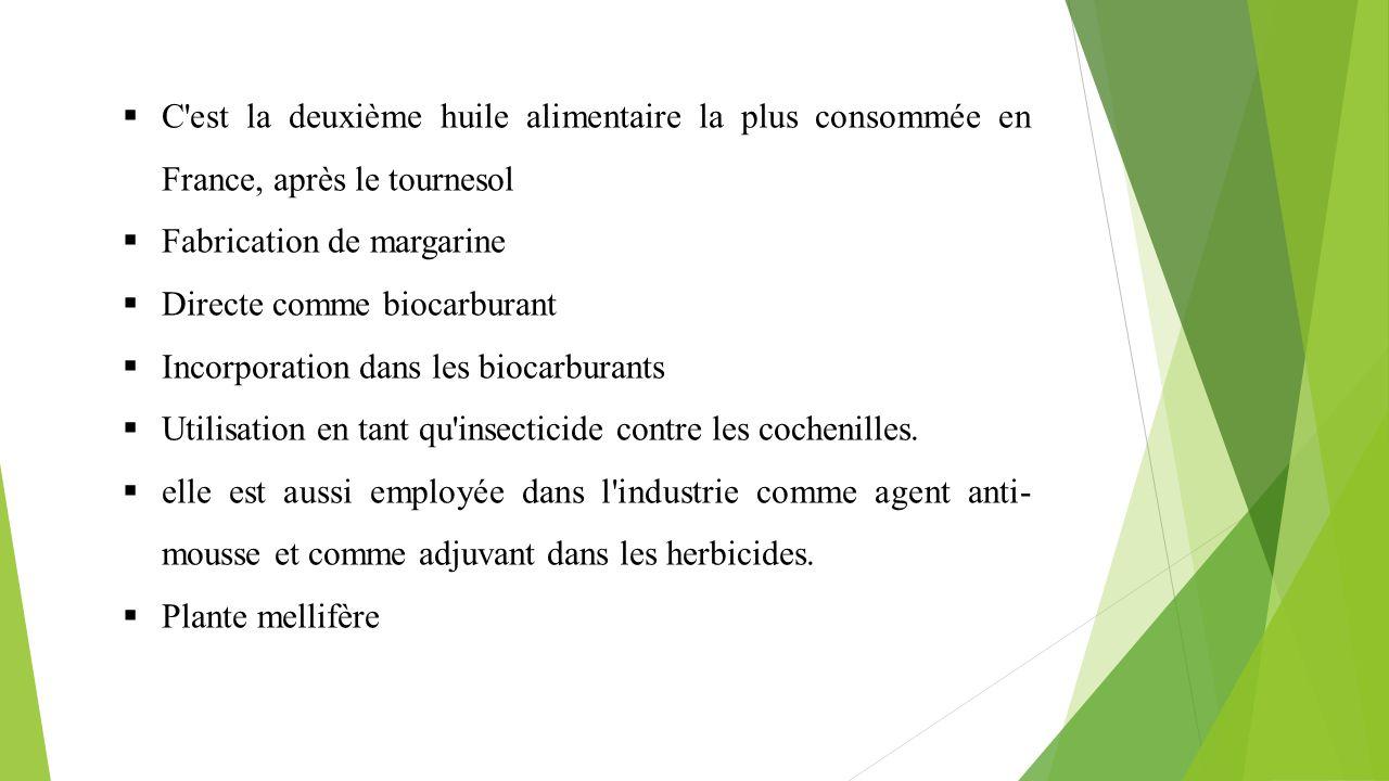 C est la deuxième huile alimentaire la plus consommée en France, après le tournesol