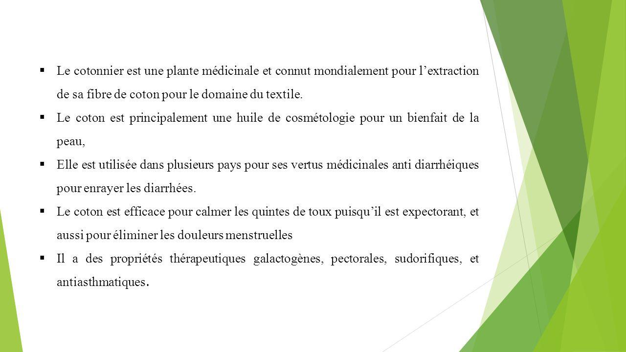 Le cotonnier est une plante médicinale et connut mondialement pour l'extraction de sa fibre de coton pour le domaine du textile.