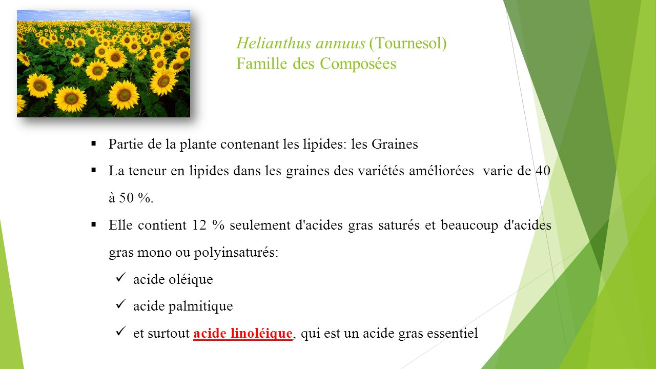 Helianthus annuus (Tournesol) Famille des Composées