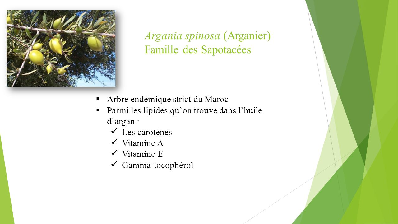 Argania spinosa (Arganier) Famille des Sapotacées