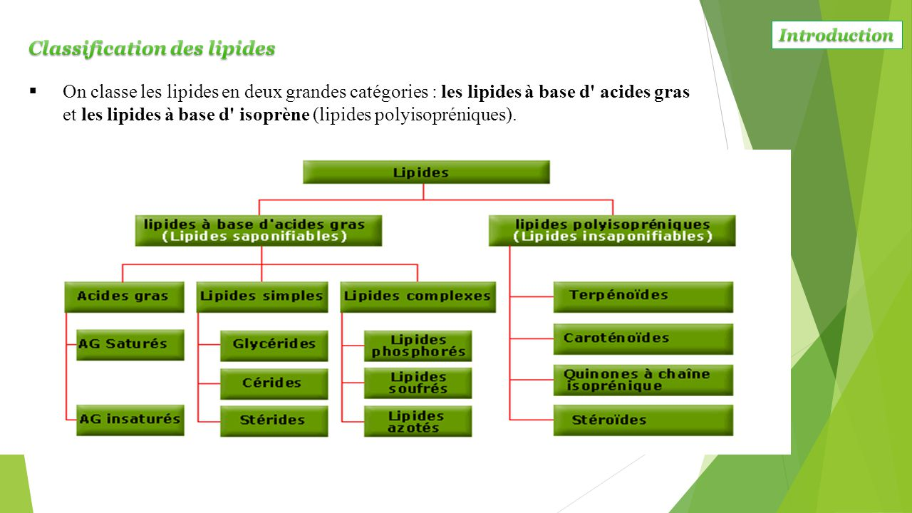 Classification des lipides