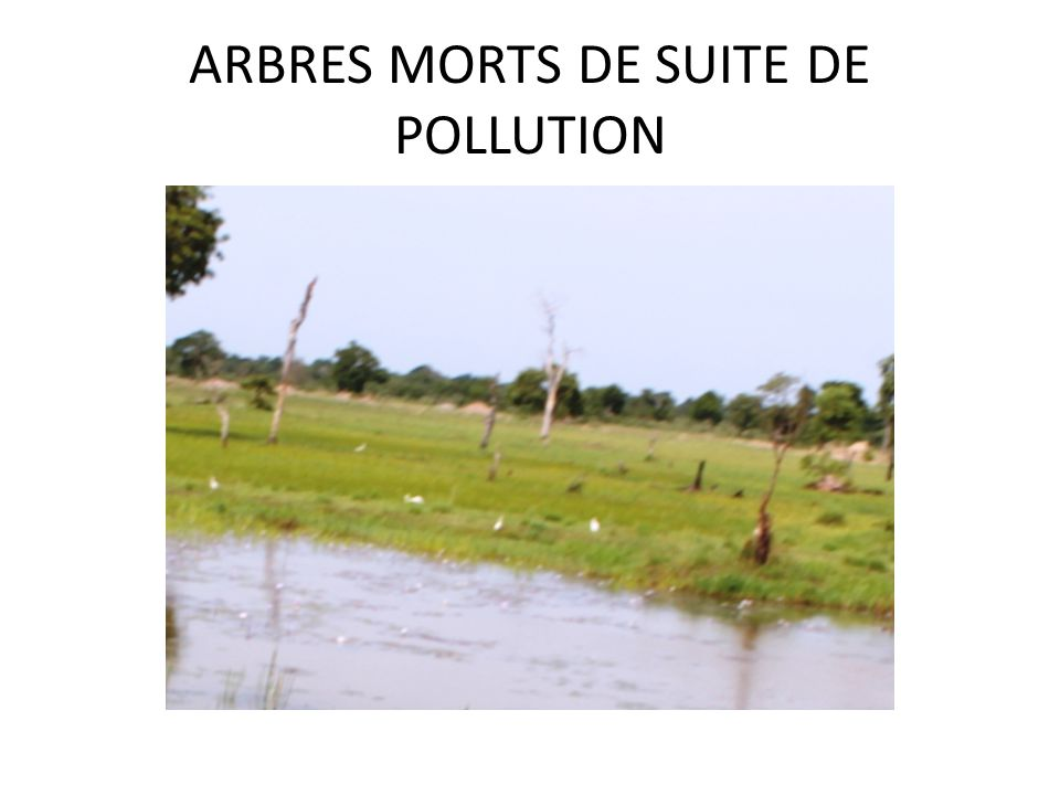 ARBRES MORTS DE SUITE DE POLLUTION