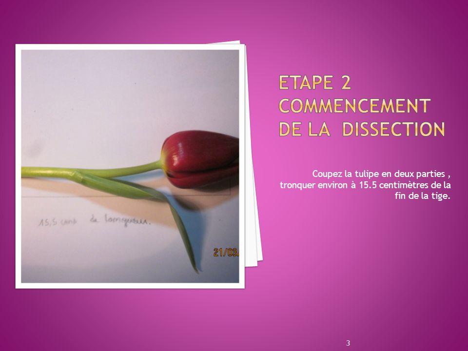 Etape 2 Commencement de la dissection