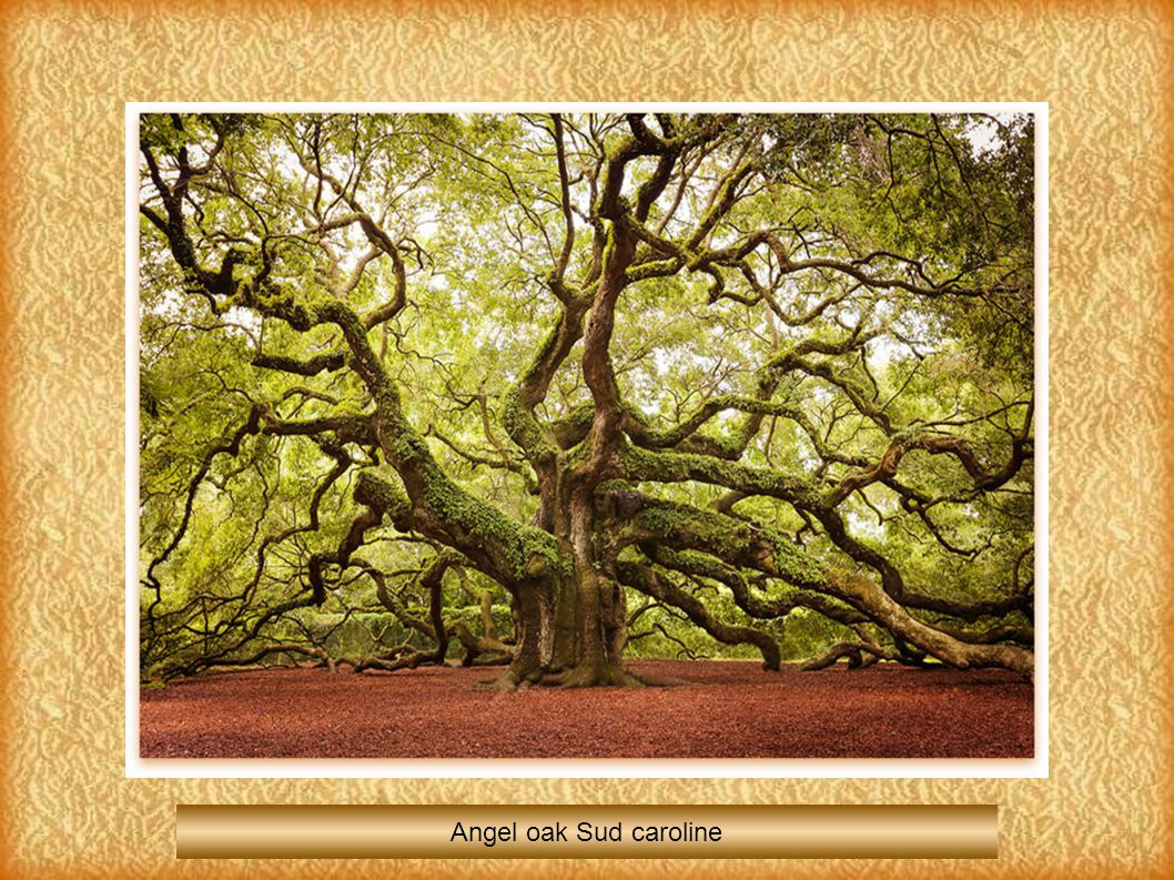Angel oak Sud caroline