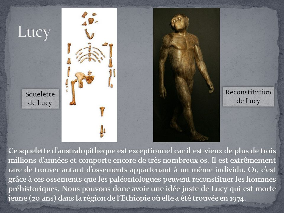 Reconstitution de Lucy