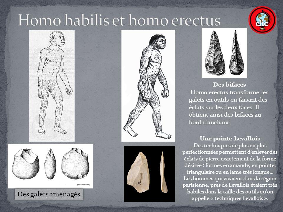 Homo habilis et homo erectus