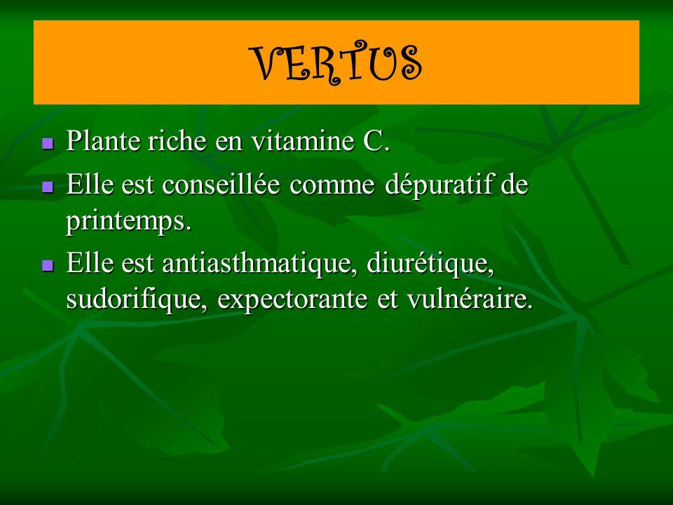 VERTUS Plante riche en vitamine C.