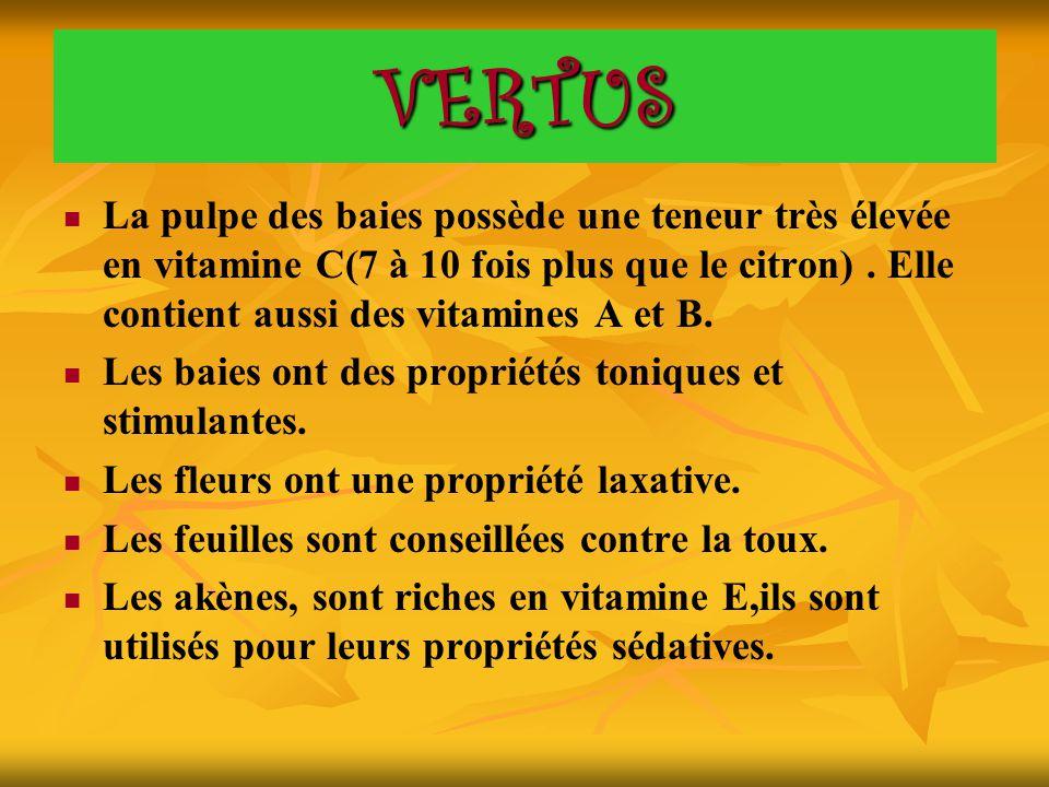 VERTUS La pulpe des baies possède une teneur très élevée en vitamine C(7 à 10 fois plus que le citron) . Elle contient aussi des vitamines A et B.