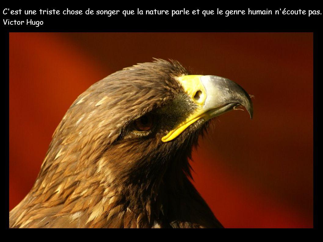 C est une triste chose de songer que la nature parle et que le genre humain n écoute pas.