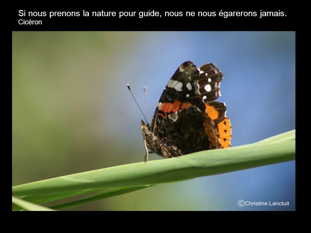 Si nous prenons la nature pour guide, nous ne nous égarerons jamais.