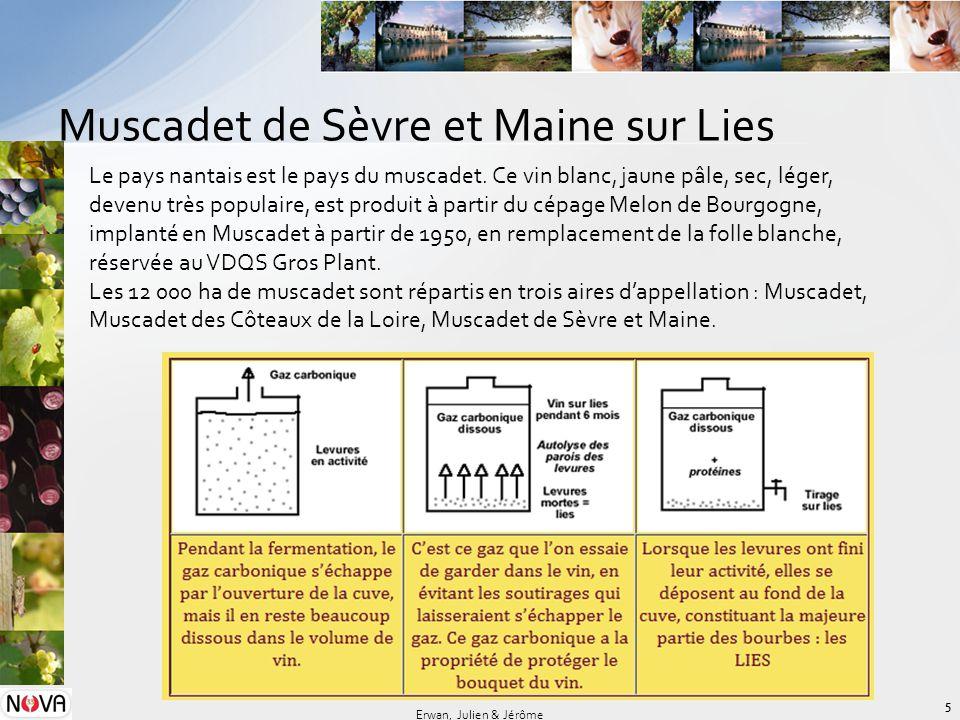 Muscadet de Sèvre et Maine sur Lies