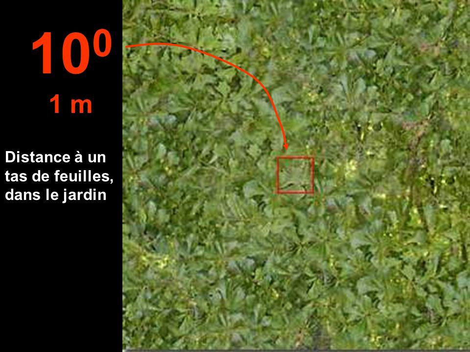 100 1 m Distance à un tas de feuilles, dans le jardin