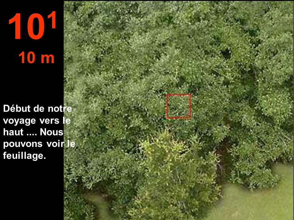 101 10 m Début de notre voyage vers le haut .... Nous pouvons voir le feuillage.