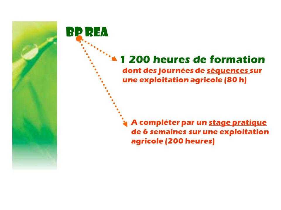 BP REA 1 200 heures de formation