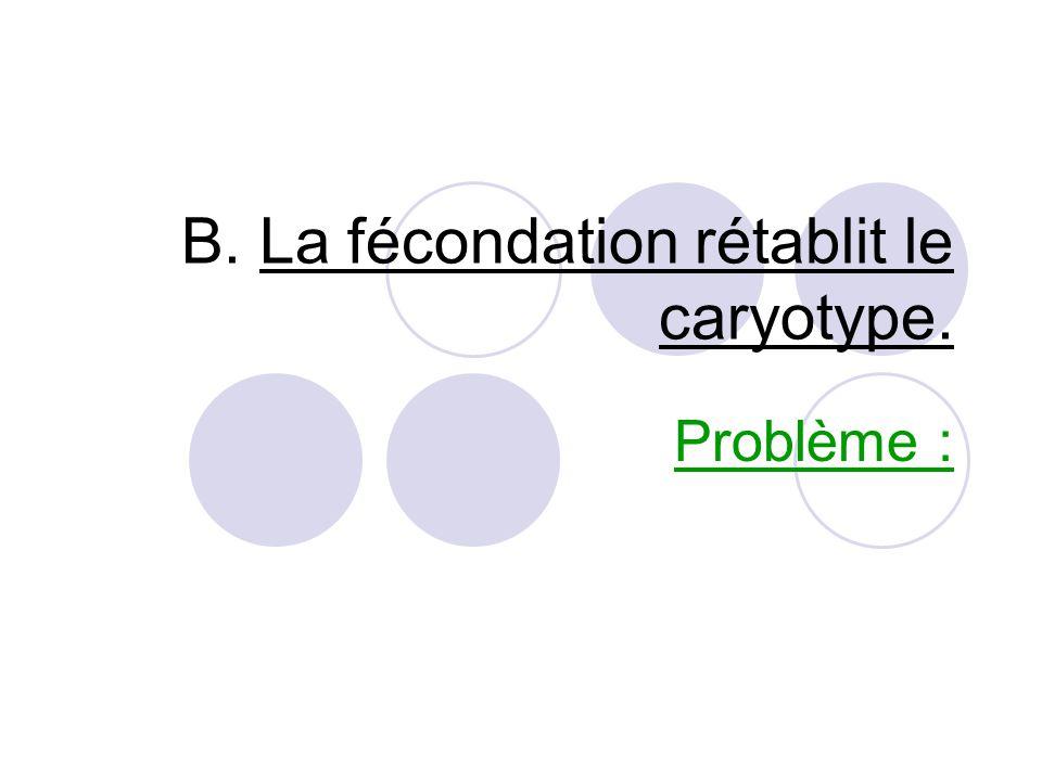 B. La fécondation rétablit le caryotype.