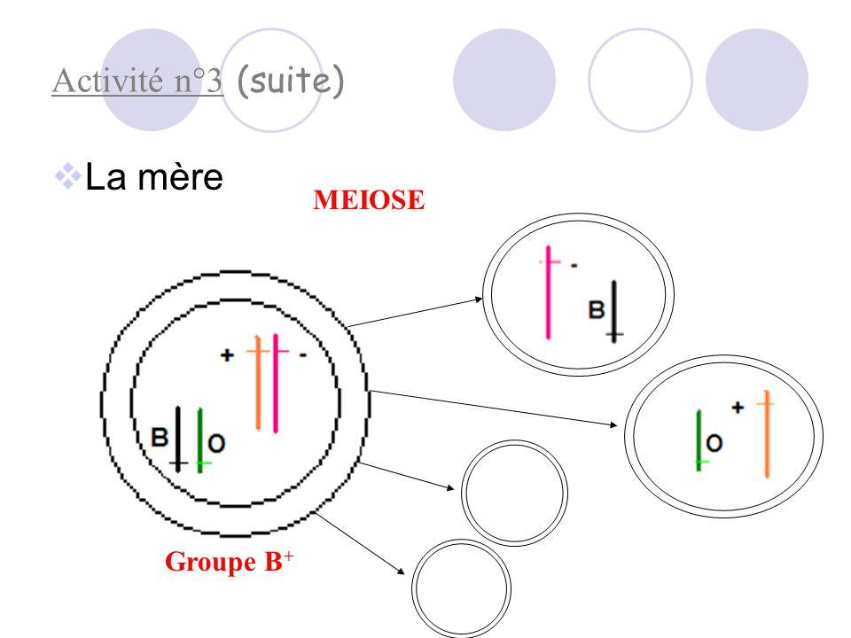 Activité n°3 (suite) La mère MEIOSE Groupe B+