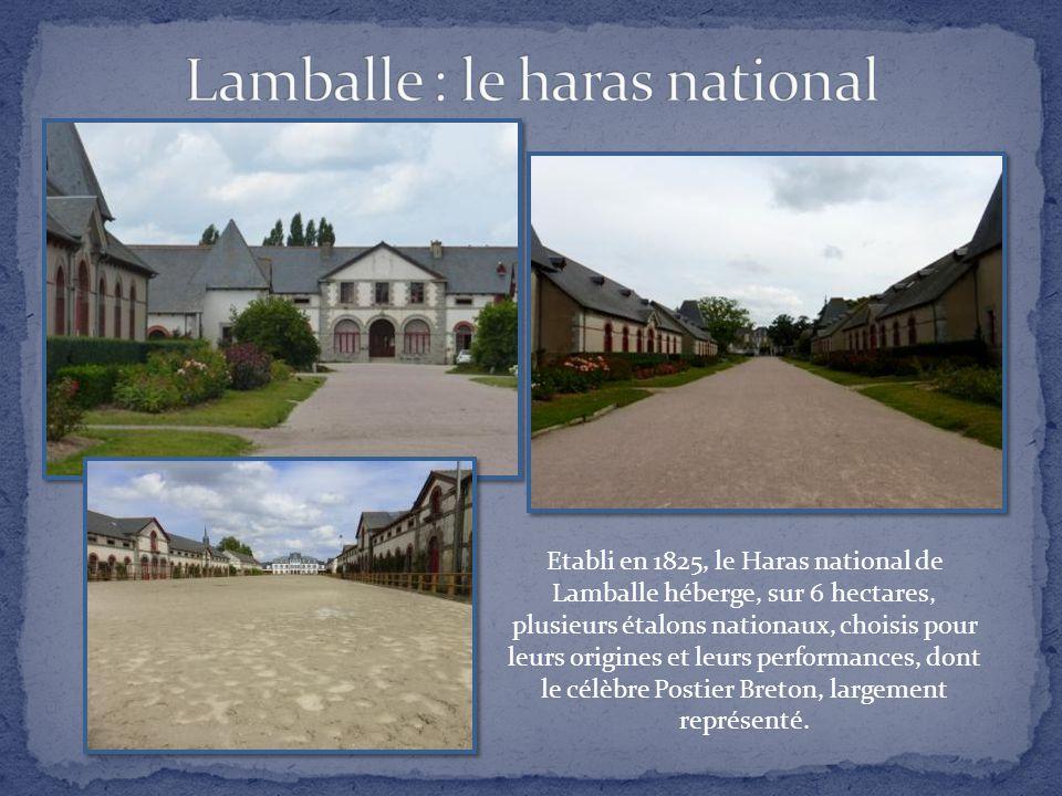Lamballe : le haras national