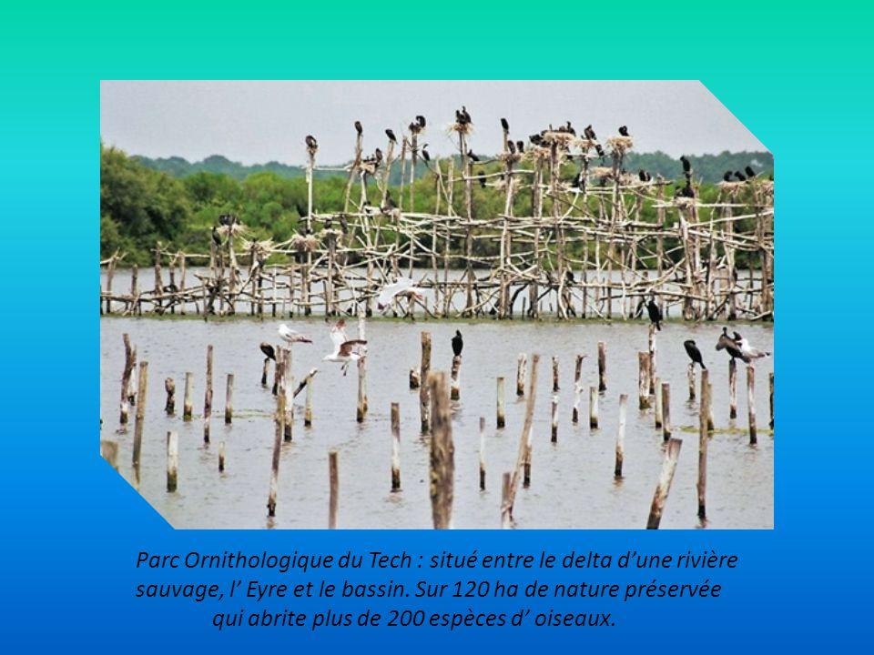 Parc Ornithologique du Tech : situé entre le delta d'une rivière sauvage, l' Eyre et le bassin. Sur 120 ha de nature préservée