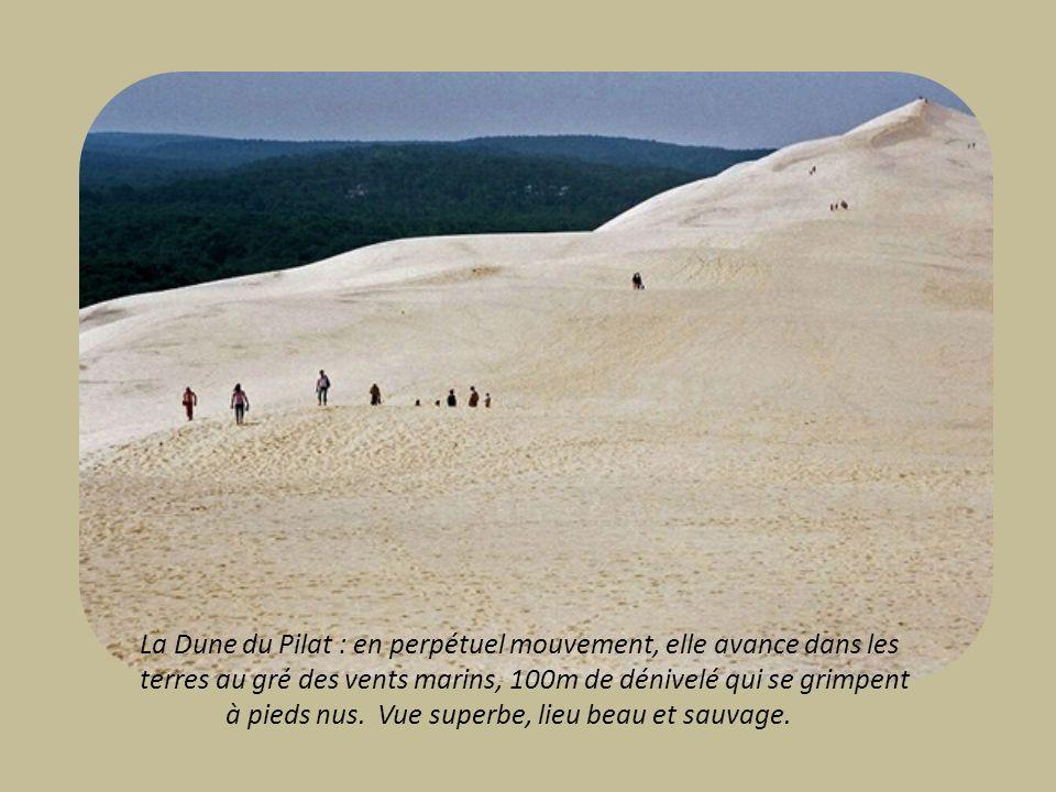 La Dune du Pilat : en perpétuel mouvement, elle avance dans les terres au gré des vents marins, 100m de dénivelé qui se grimpent
