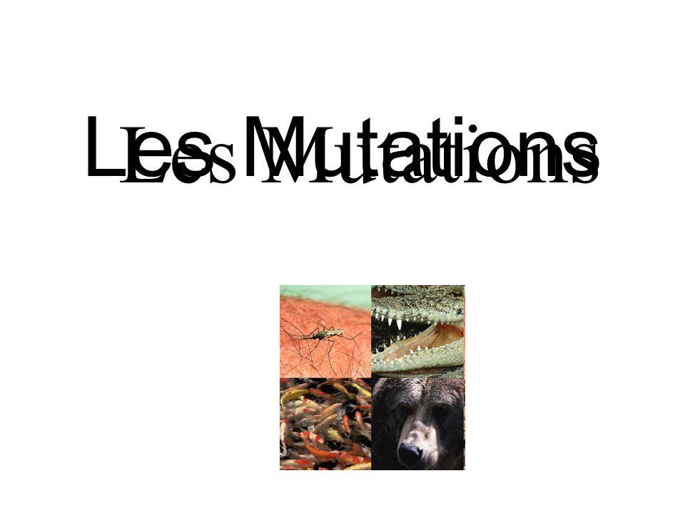 Les Mutations Les Mutations