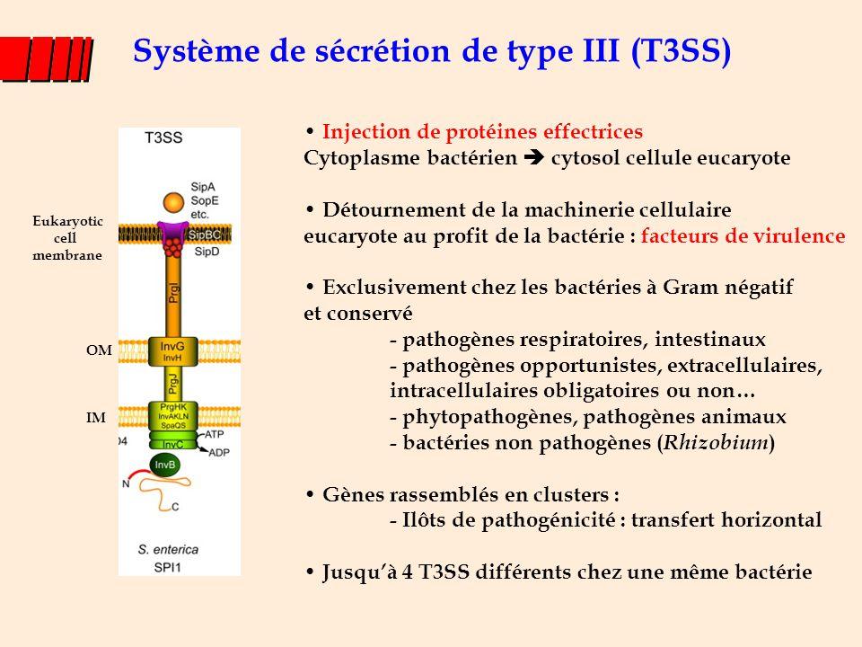 Système de sécrétion de type III (T3SS)