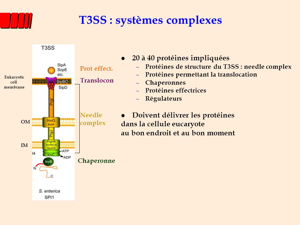 T3SS : systèmes complexes
