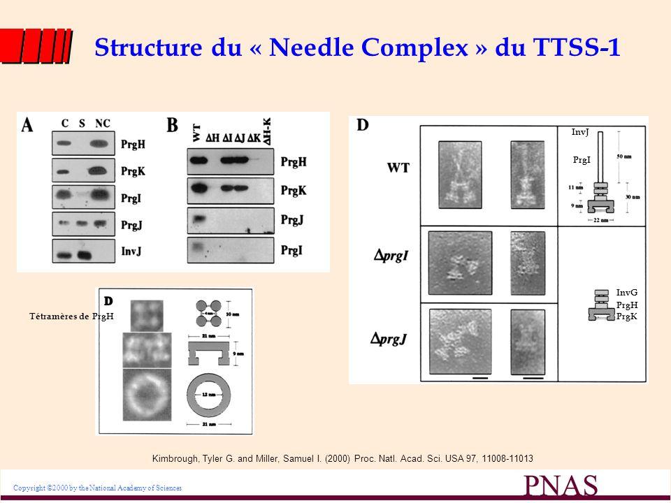 Structure du « Needle Complex » du TTSS-1