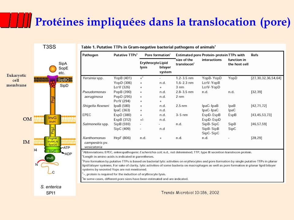 Protéines impliquées dans la translocation (pore)
