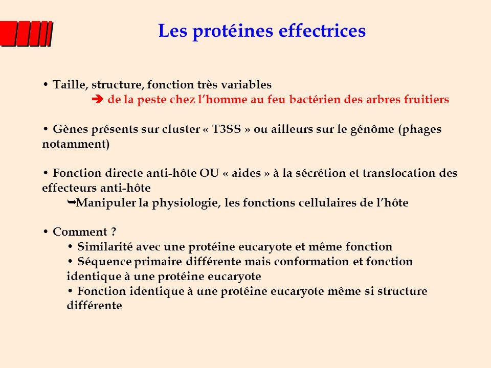 Les protéines effectrices