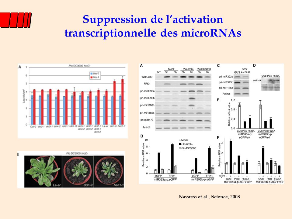 Suppression de l'activation transcriptionnelle des microRNAs