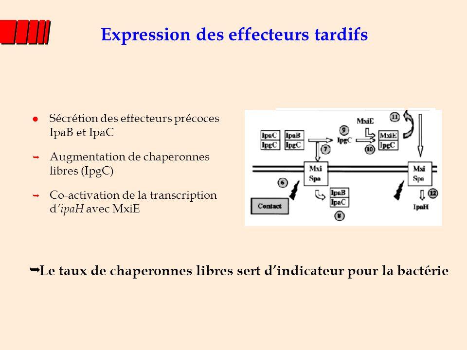Expression des effecteurs tardifs