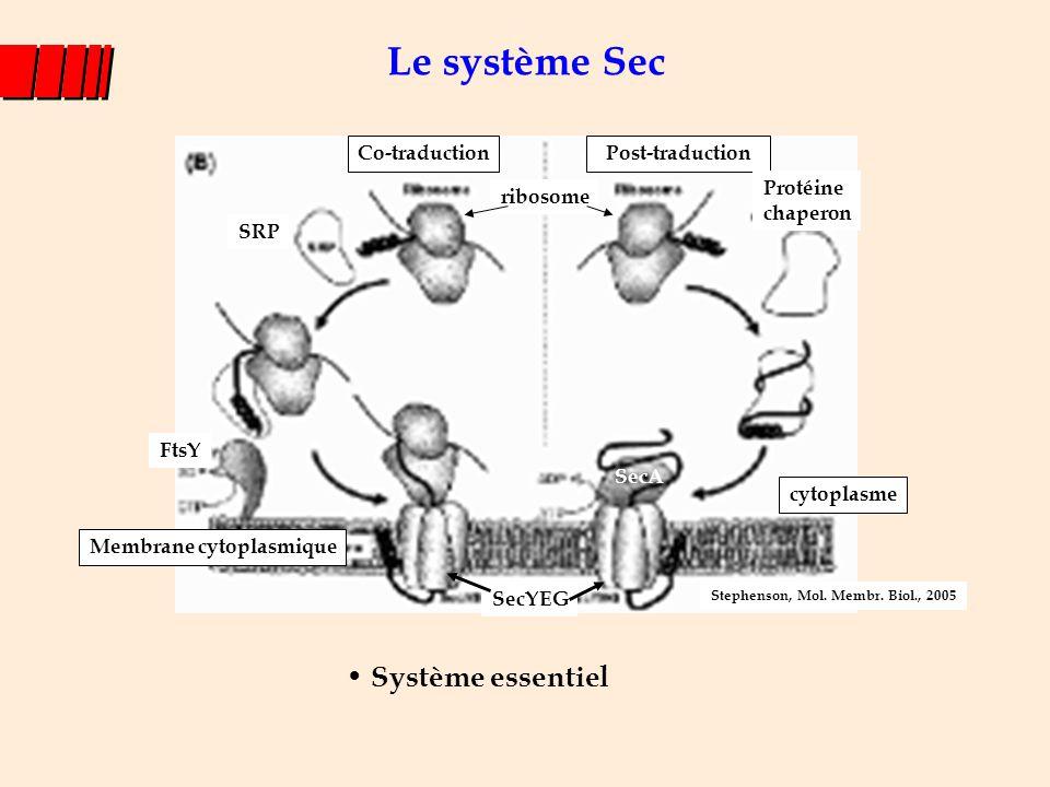 Le système Sec Système essentiel Membrane cytoplasmique Co-traduction