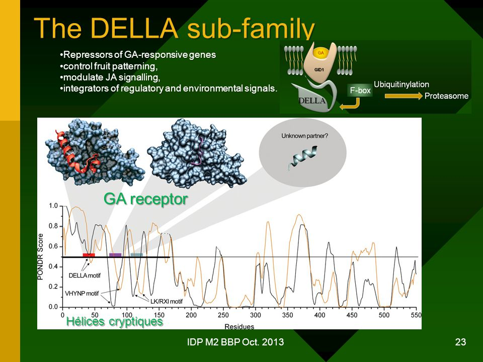 The DELLA sub-family GA receptor Hélices cryptiques