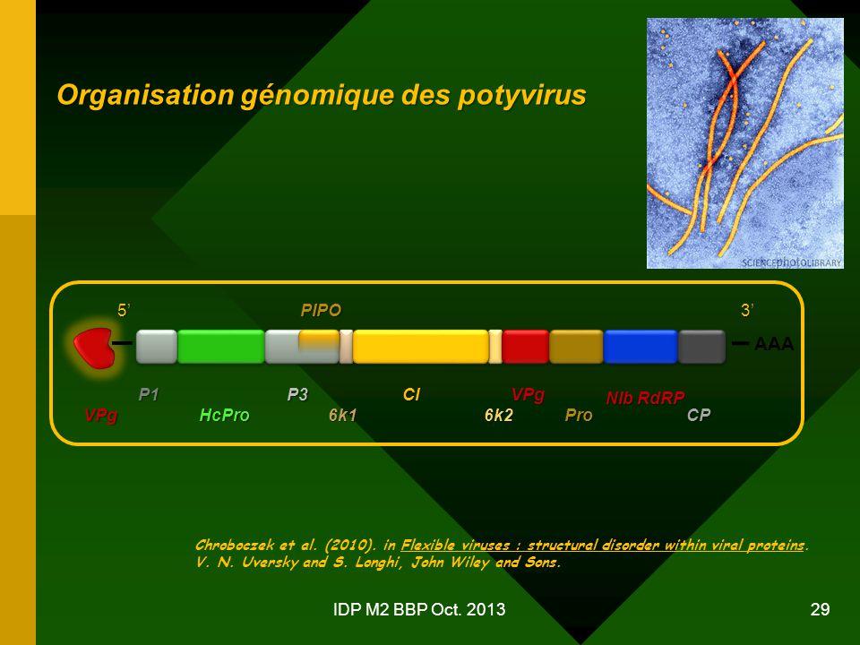 Organisation génomique des potyvirus