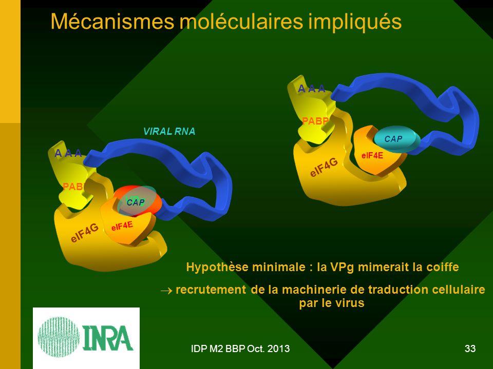 Mécanismes moléculaires impliqués