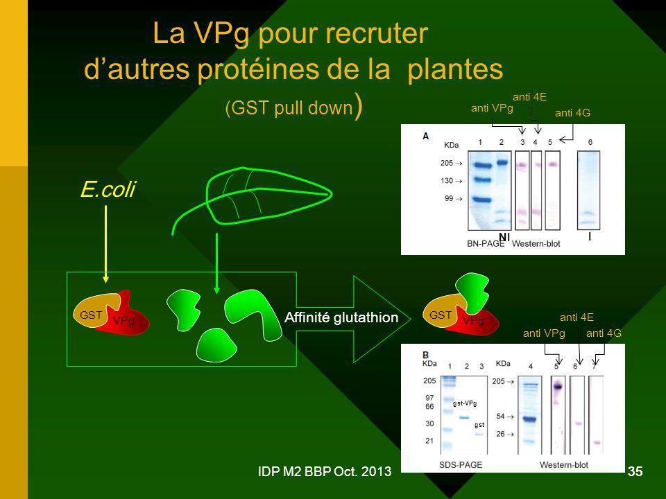 d'autres protéines de la plantes