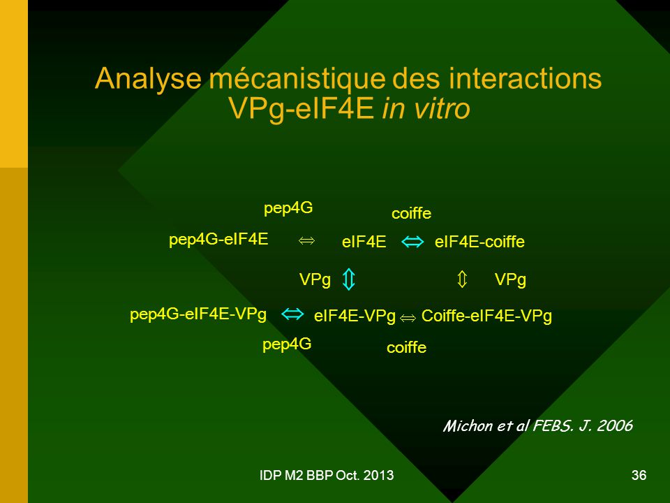 Analyse mécanistique des interactions VPg-eIF4E in vitro