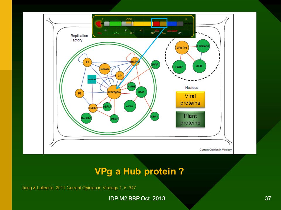 VPg a Hub protein Viral proteins Plant proteins IDP M2 BBP Oct. 2013
