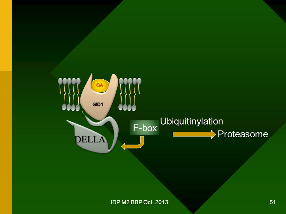 GA GID1 Ubiquitinylation F-box Proteasome DELLA IDP M2 BBP Oct. 2013
