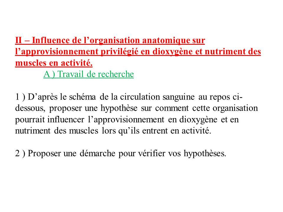 II – Influence de l'organisation anatomique sur l'approvisionnement privilégié en dioxygène et nutriment des muscles en activité.