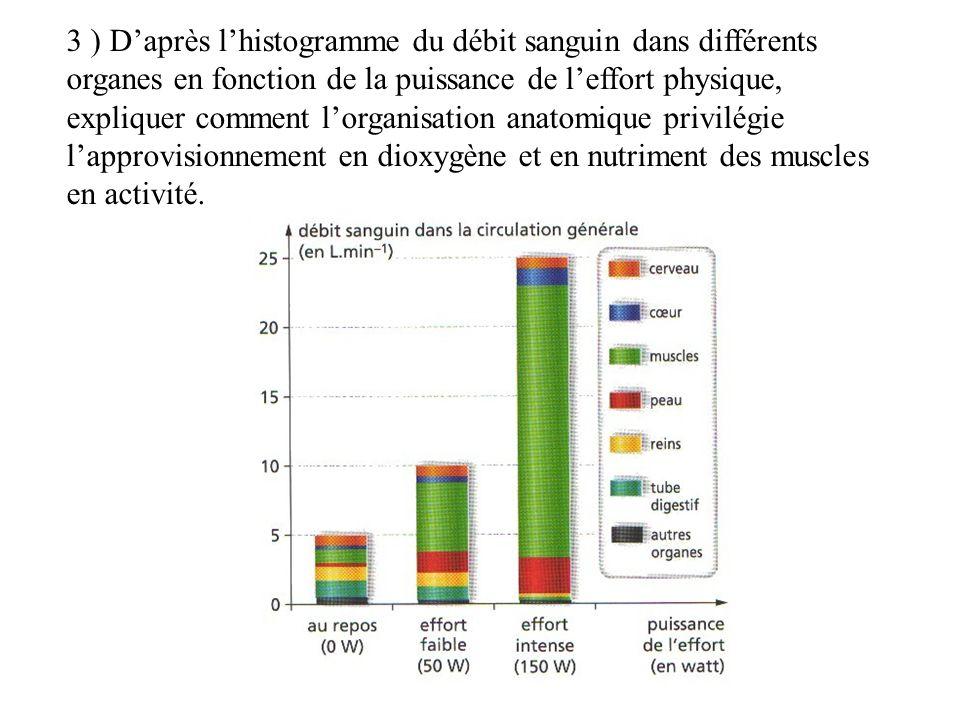 3 ) D'après l'histogramme du débit sanguin dans différents organes en fonction de la puissance de l'effort physique, expliquer comment l'organisation anatomique privilégie l'approvisionnement en dioxygène et en nutriment des muscles en activité.