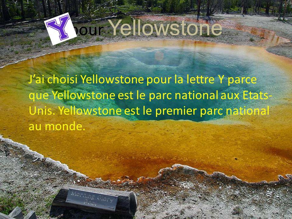 pour Yellowstone
