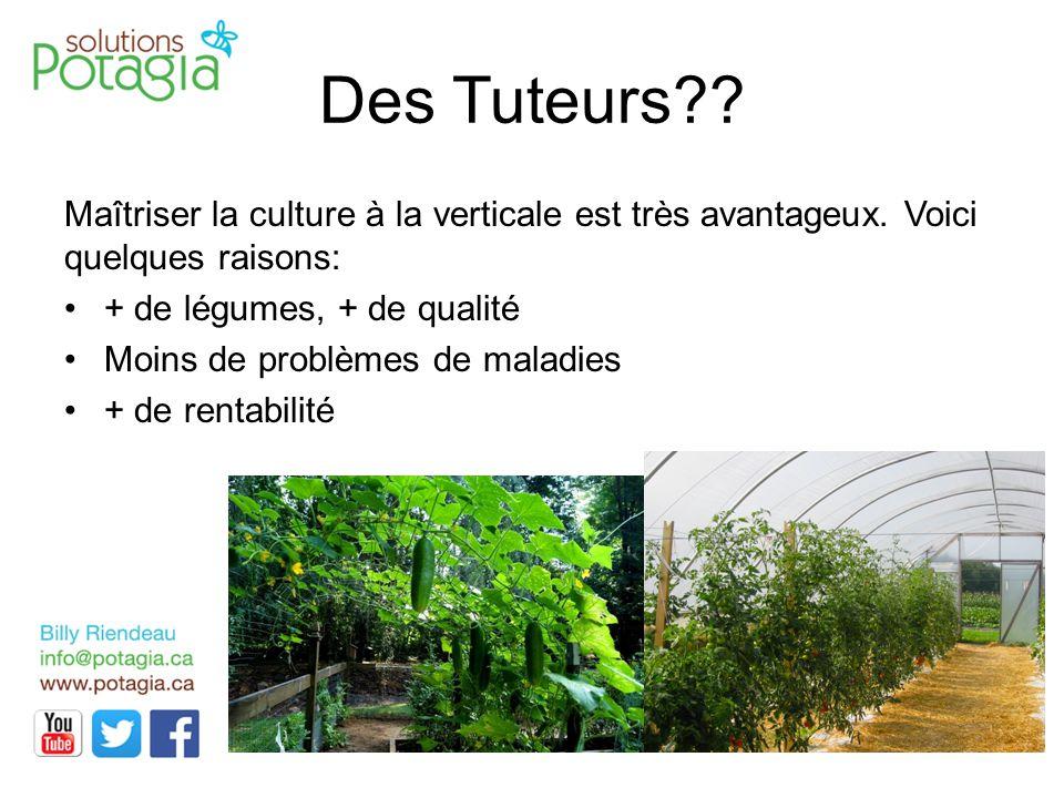 Des Tuteurs Maîtriser la culture à la verticale est très avantageux. Voici quelques raisons: + de légumes, + de qualité.
