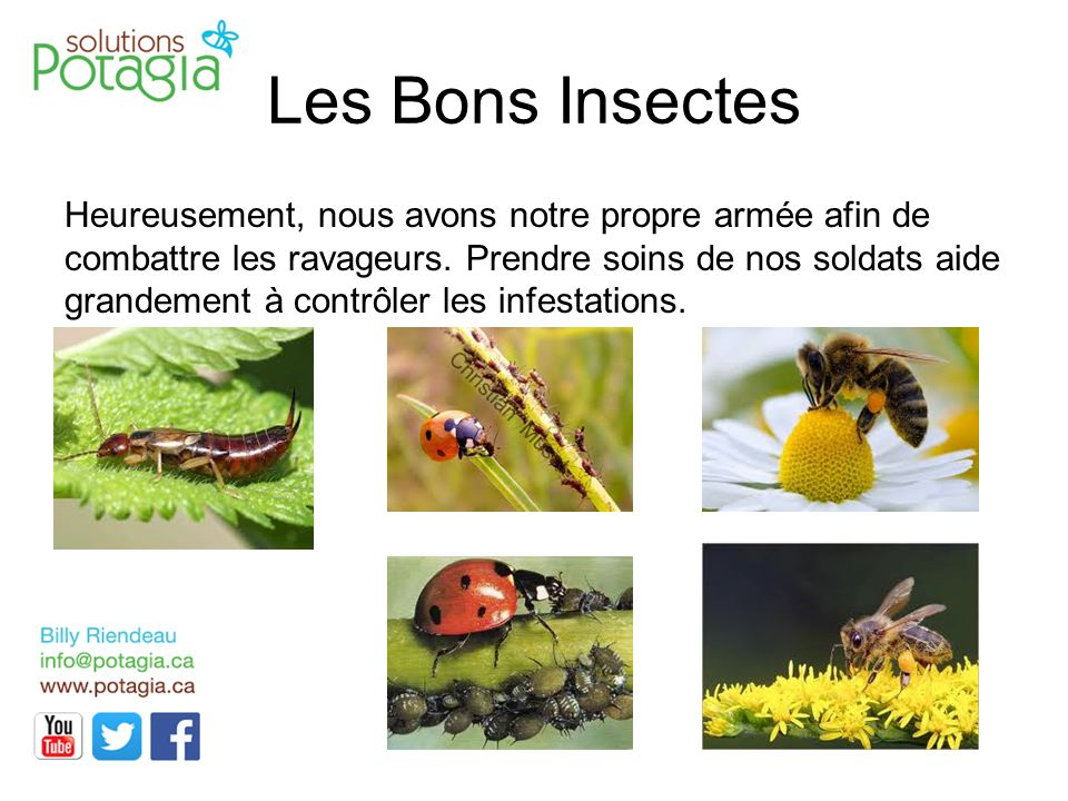Les Bons Insectes
