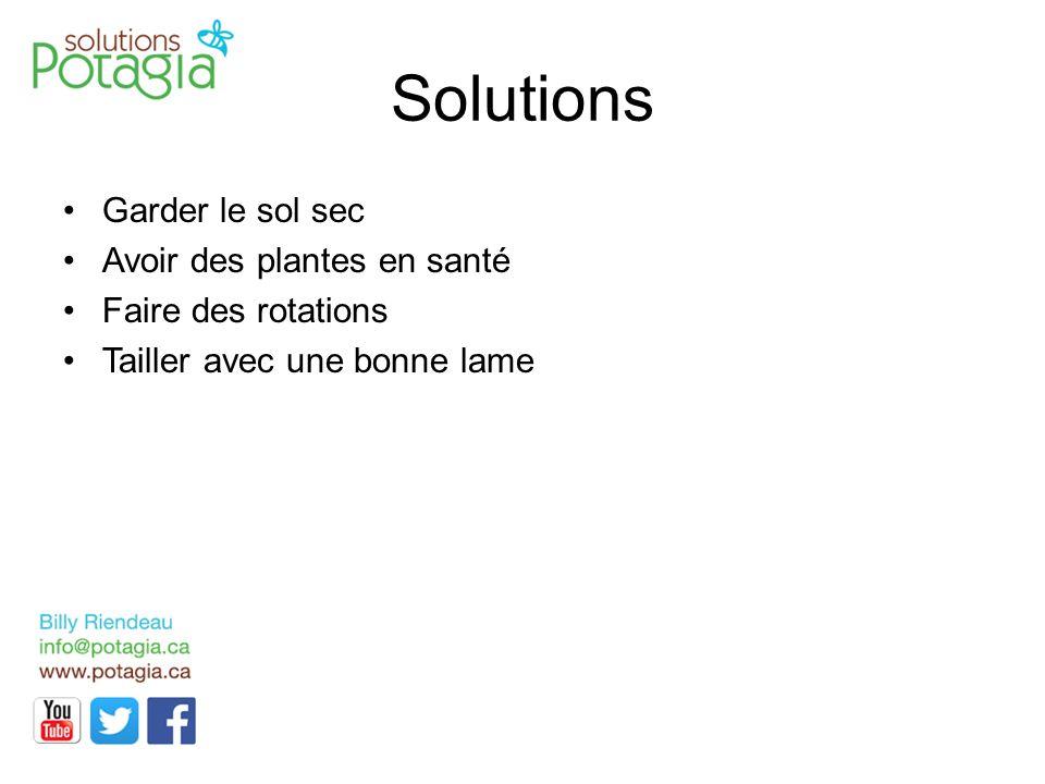 Solutions Garder le sol sec Avoir des plantes en santé