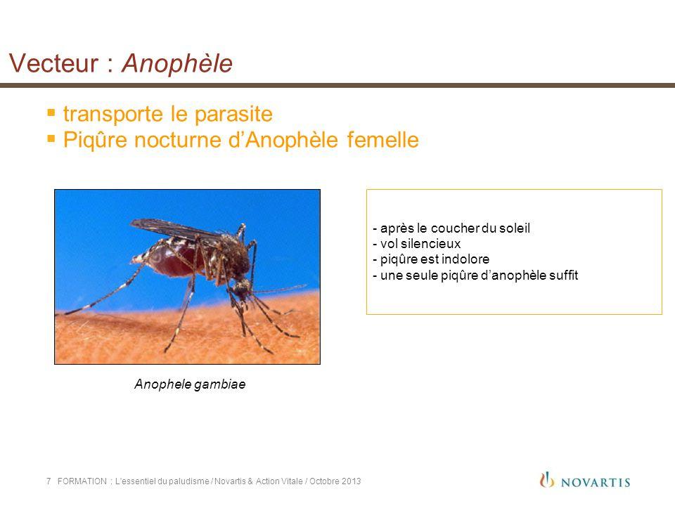 Vecteur : Anophèle transporte le parasite