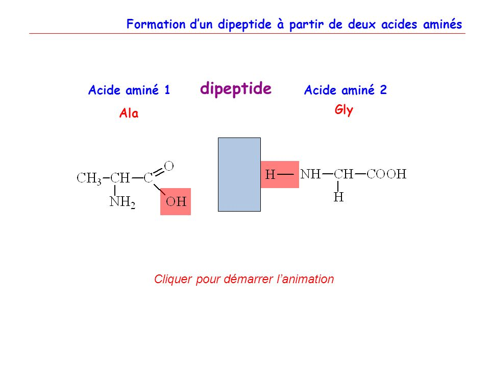 dipeptide Formation d'un dipeptide à partir de deux acides aminés