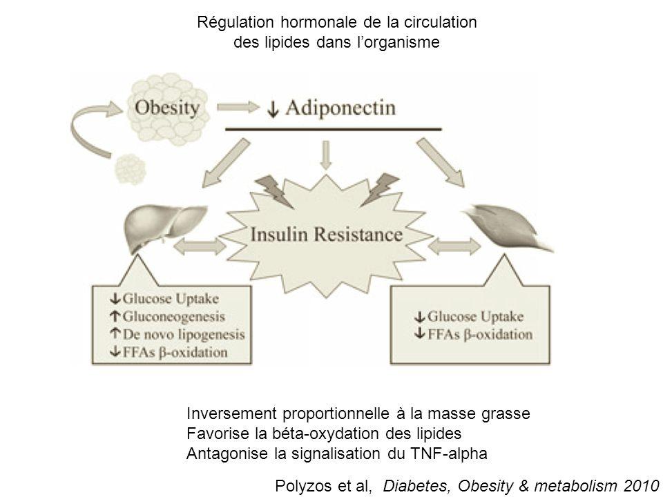 Régulation hormonale de la circulation des lipides dans l'organisme