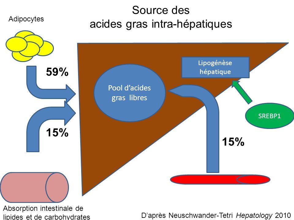 Source des acides gras intra-hépatiques